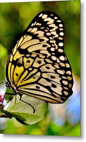 Mariposa Butterfly Metal Print