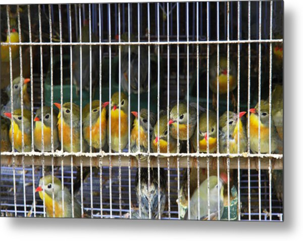 Market Finches Metal Print
