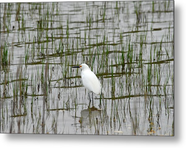 Marsh Bird 1 Metal Print