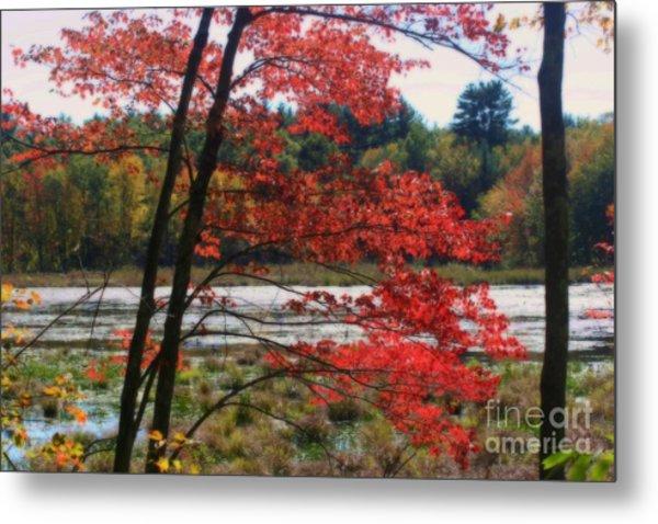 Marsh In Autumn Metal Print