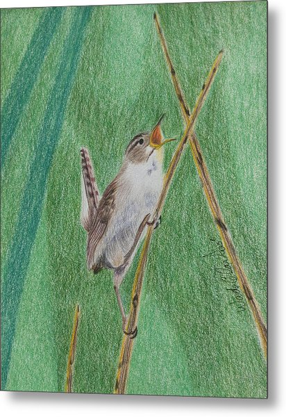 Metal Print featuring the painting Marsh Wren by Wade Clark