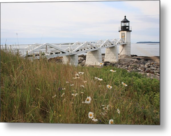 Marshall Point Daisies Metal Print