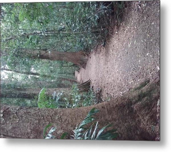 Mary Cairncross Rainforest  Metal Print
