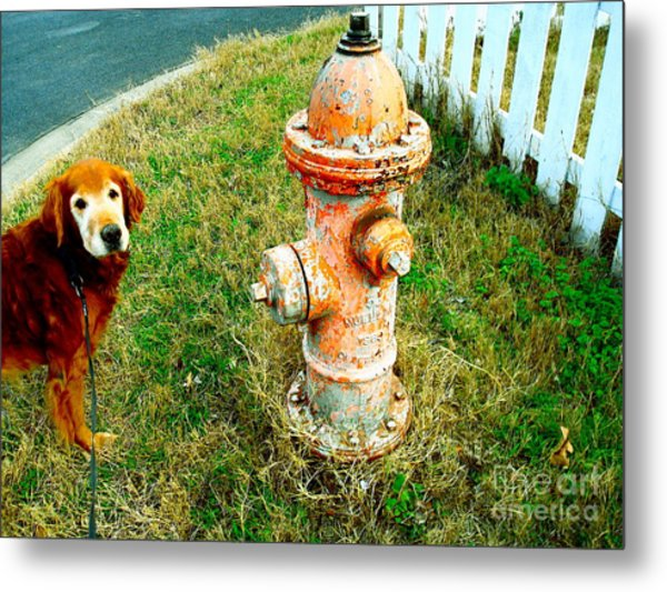 Matching Dog And Fire Hydrant Metal Print by Chuck Taylor