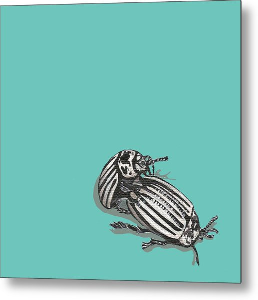 Mating Beetles Metal Print