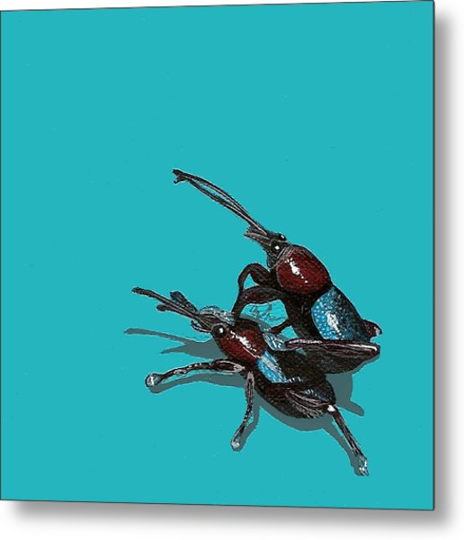 Mating Weevils Metal Print