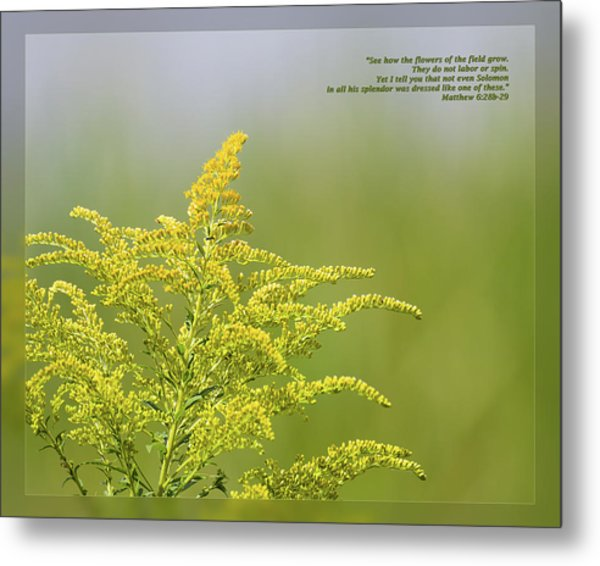 Metal Print featuring the photograph Matthew 6 28b-29 by Dawn Currie