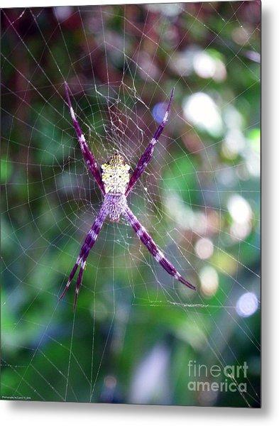 Maui Orbweaver/garden Spider Metal Print