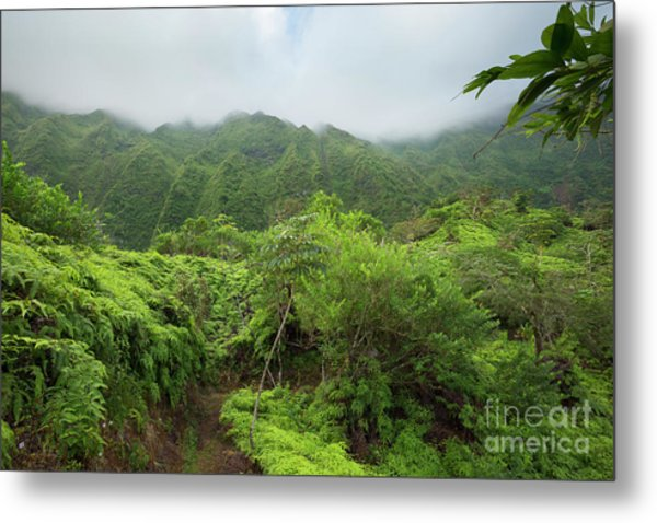 Maunawili Demonstration Trail Metal Print