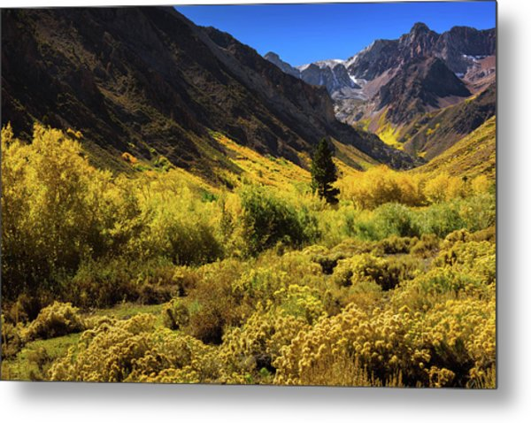 Mcgee Creek Alive With Color Metal Print