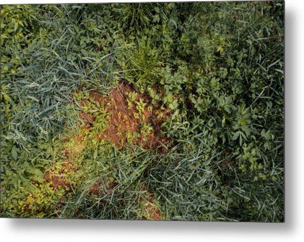Meadow Floor Metal Print