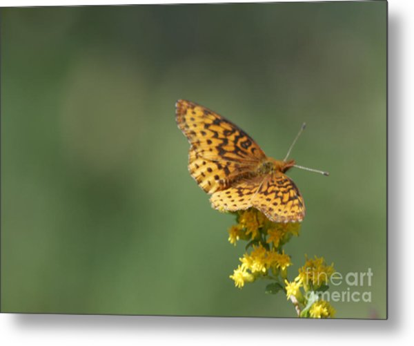 Meadow Fritillary Metal Print