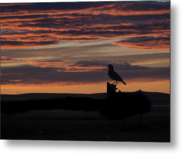 Meadow Lark's Salute To The Sunset Metal Print