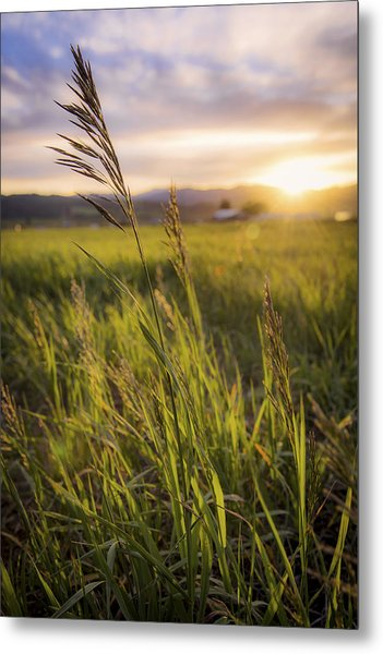 Meadow Light Metal Print