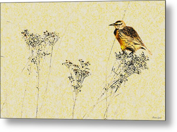 Meadowlark In Kansas Prairie 1 Metal Print