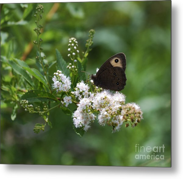 Meadowsweet Wood Nymph Metal Print