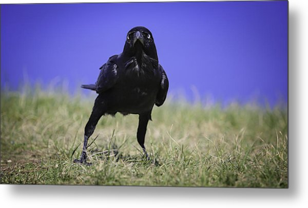 Menacing Crow Metal Print