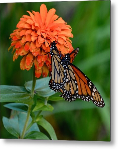 Menage Of Monarchs Metal Print