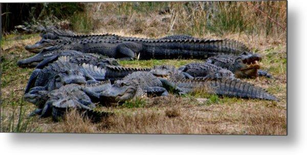 Mess 'o Alligators Metal Print