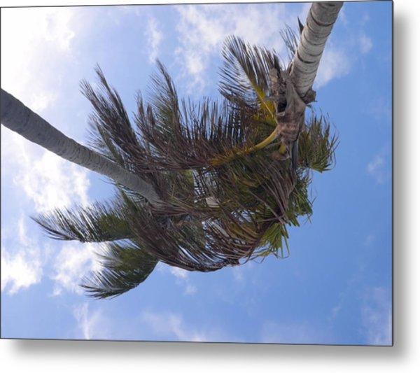 Miami Palms Metal Print by JAMART Photography