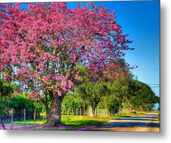 Miami's Fall Colors Metal Print by William Wetmore