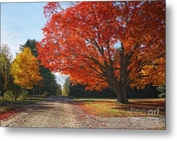 Michigan Spellbound Metal Print