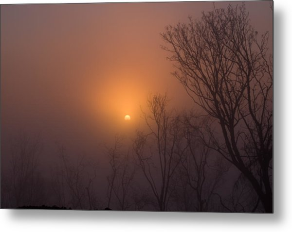 Mid Day Fog Metal Print by Naman Imagery