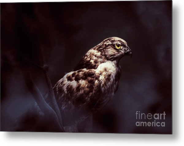 Midnight Hawk Metal Print