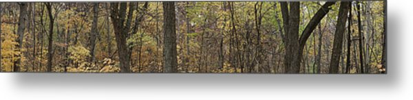 Midwest Forest Metal Print