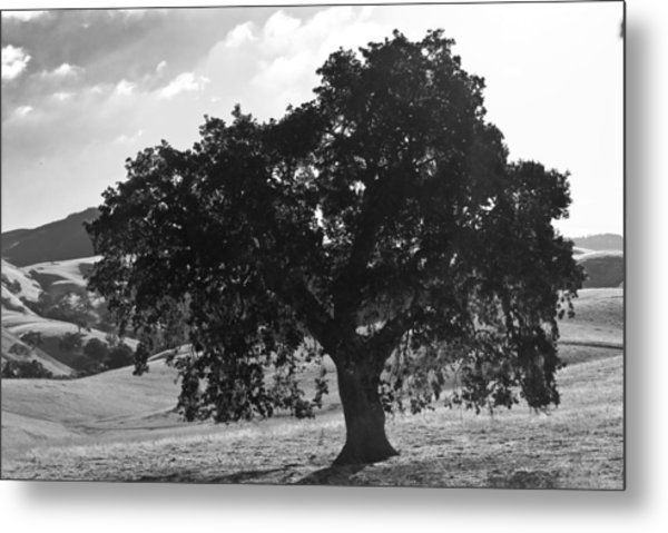 Mighty The Oak Metal Print