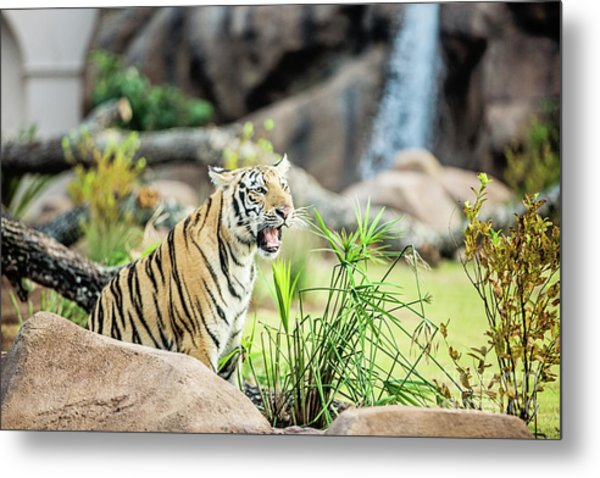Mike Vii Ready For The Season Metal Print