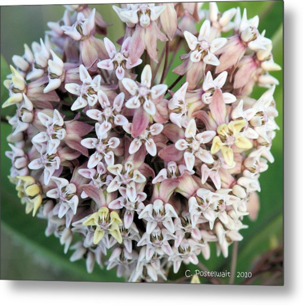 Milkweed Flower Ball Metal Print