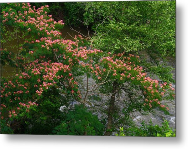 Mimosa On The Dan River Metal Print