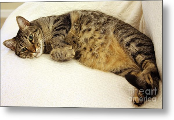 Ming Resting On The Couch Metal Print