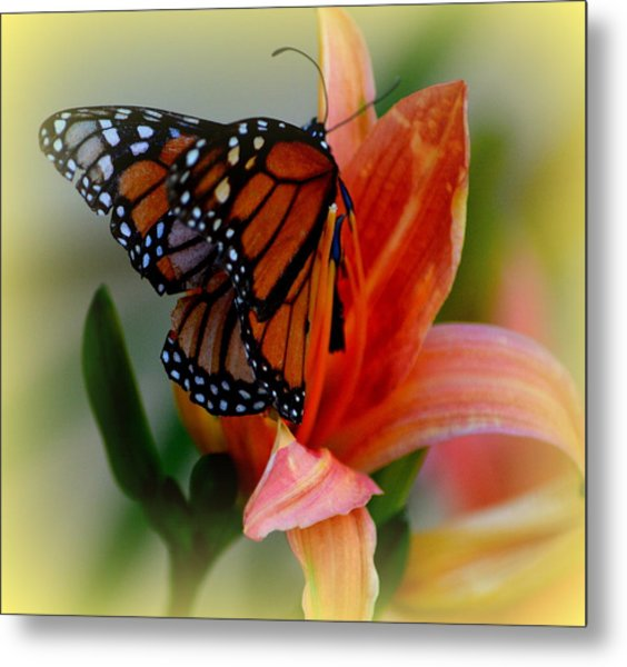Mingle With A Monarch Metal Print