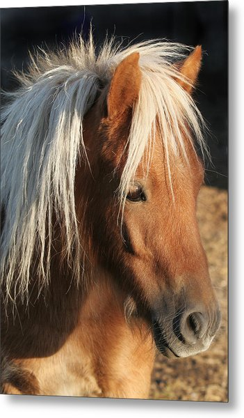 Mini Horse Portrait Two Metal Print by Laurie With