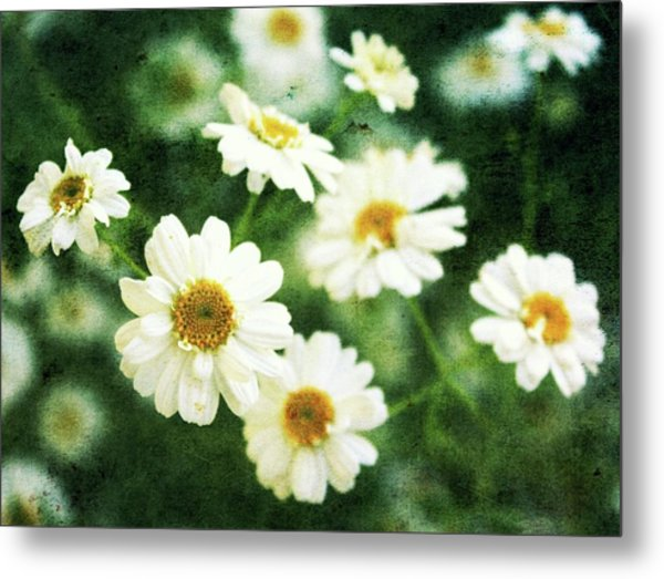 Mini Spring Daisy's Metal Print by Cathie Tyler