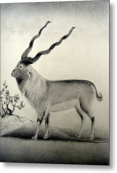 Miniature Drawing Of Oryx Metal Print by Caroline  Urbania Naeem
