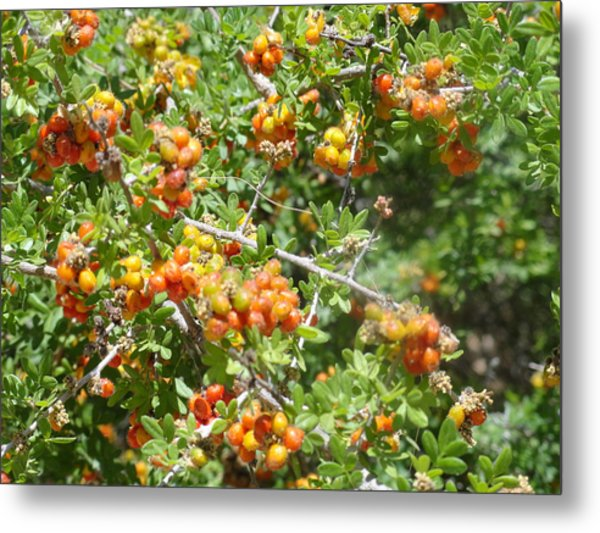 Miniature Fruit Balls Metal Print