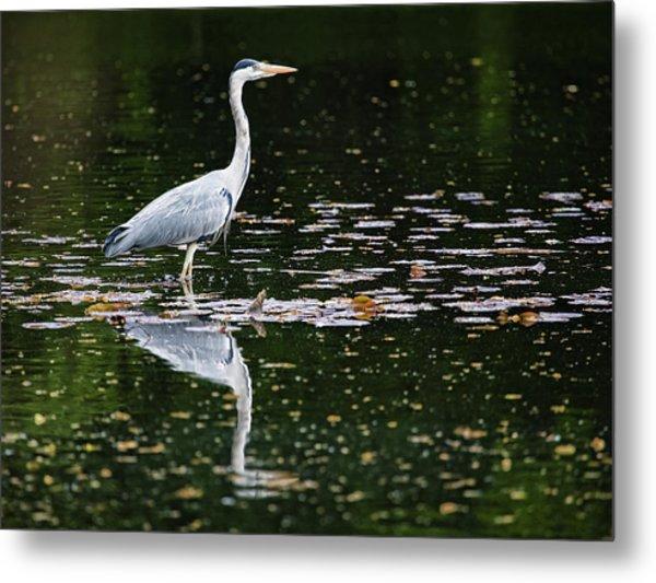 Mirrored Heron Metal Print