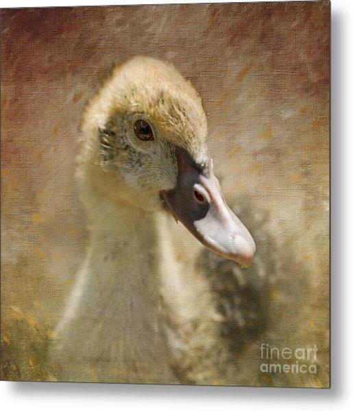 Miss Duck Metal Print
