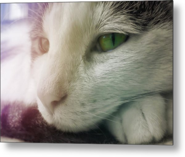 Miss Ginny Metal Print by JAMART Photography