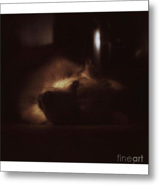 Miss Hannah. #dogs #petstagram #gsd Metal Print