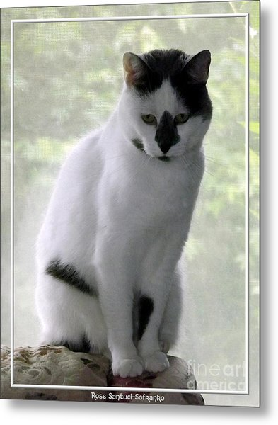 Metal Print featuring the photograph Miss Jerrie Cat With Watercolor Effect by Rose Santuci-Sofranko