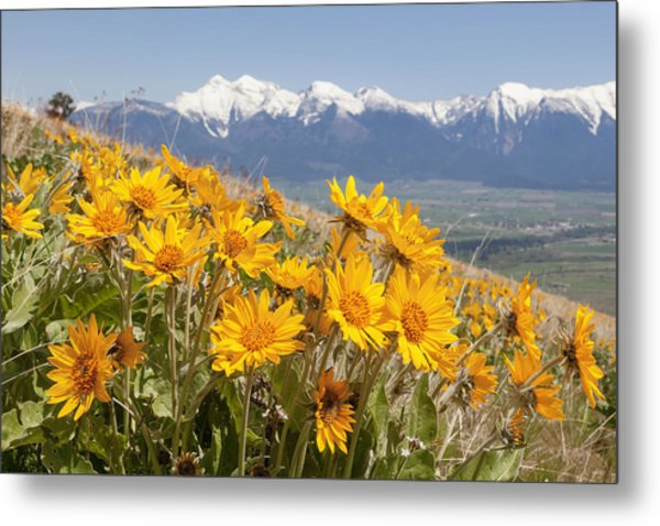 Mission Mountain Balsam Blooms Metal Print