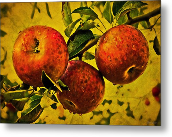 Mister's Apples Metal Print