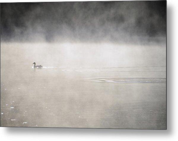 Misty Duck Metal Print