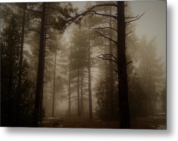 Misty Forest Morning Metal Print