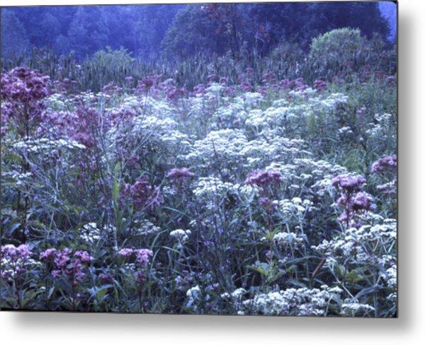 Misty Morning Wildflowers 3 Metal Print