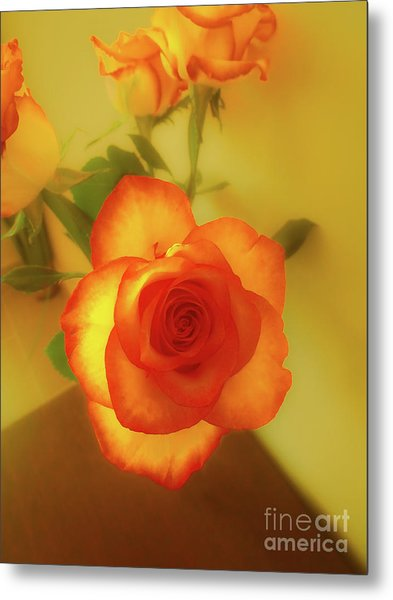 Misty Orange Rose Metal Print